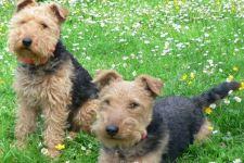 Urlaub mit Hund Ferienwohnung Deutschland Ferienhaus Haustier